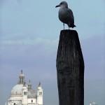 Benátky XI_2013 007