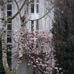 Dusseldorf - Oberkassel 10